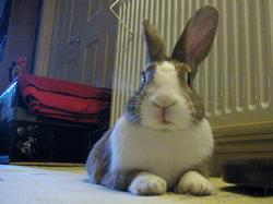 image of Flicka, Assistant Bunnyhugga Rep - My Life