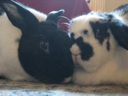 image of Secrets to a long and happy rabbit relationship
