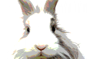 image of Bunnyhugga has a new design and features