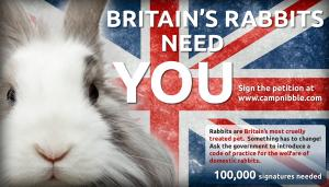 image of Petition the UK government to introduce a Code of Practice for the welfare of domestic rabbits