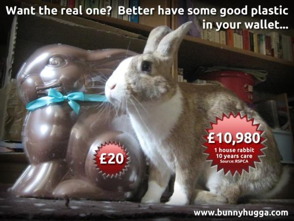 The real cost of keeping a rabbit