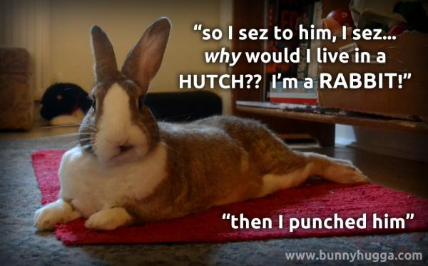 Flicka asking why rabbits should live in a hutch