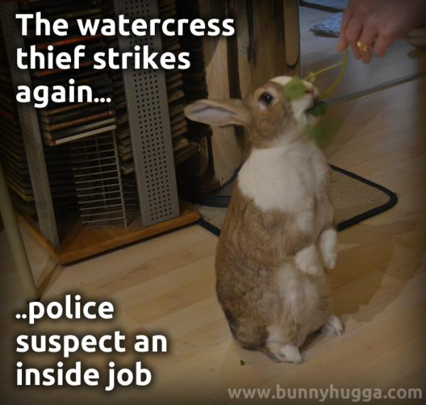 House rabbit begging for watercress