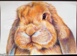 image of Personalised artwork by Kelly Anderson raising funds for rabbits in need