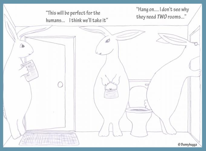 A unique take on life from the rabbits' point of view