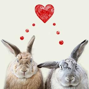 image of Share the love this Valentine's Day and support the RSPCA